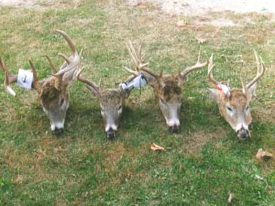 4 deer heads from Whitetail outfitter Ten Point Lodge, LLC land